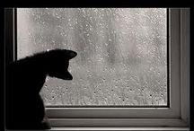 pluie, pluie, pluie / by Eden Jamison