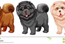 Hund  Chau Chau