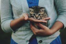 Kitteh :stuff: / by Cristy
