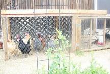 FARM ANIMALS/ HOUSING