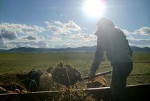 Agroturismo / Contacto directo con los campesino y labores diarias de #cabañeros