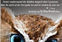 Animal Spirit Guides / Pins, pictures and posts about animal spirit guides, power animals, totem animals and spirit animals.