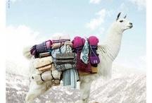 ¤ Lamas