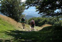 Los Caminos de Santiago en Navarra