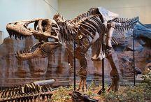 The past - El pasado / The world of yesterday, History and Paleontology - El mundo del ayer, Historia y Paleontología