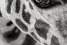 animalsy oczy