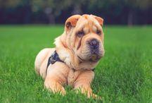 Dog photos - Kutya fotók