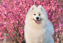 Dogs I dream of