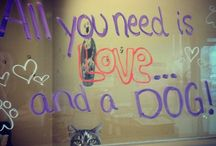Our Window Art! / Our past window art is in this board! Please note that any animals peeping through our windows are likely to be adopted- check out our website, www.citypound.ca, for all current adoptables! :)