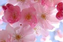 Flowers / by Elaine Jones