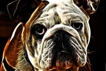 Bulldog Art / by Tammy Palmer
