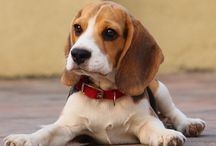 beagle love / by Brittany Obey