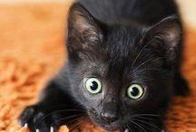 Kittenz / by Chandra Walker