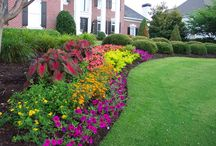 Curb Appeal / Spring 2014 project / by Terri Durham