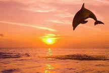 delfinek / za zapadu slunce