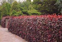 Κόκκινα φυτα