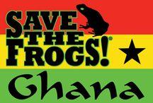 SAVE THE FROGS! Ghana / http://savethefrogs.com/ghana