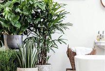Plants & Landscape