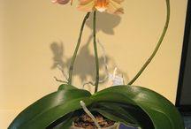 ORHIDEE ( AND INDOOR PLANTS)