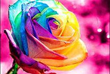 Florecillas bonitas