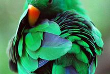 ★Green Birds★