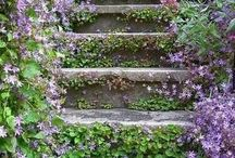 Steps I want to take. / Beautiful staircases that make u want to discover where the may lead.