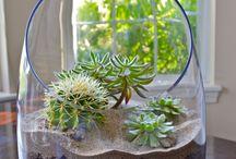 Flori / plante