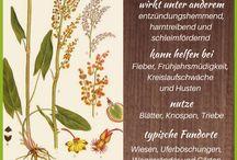 Wildpflanzen-Steckbriefe / Kurzprofile wilder Kräuter, Sträucher und Bäume. #wildkräuter #wildpflanzen #heilkräuter