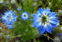 Il Giardino dei Fiori - Edible Flowers and Herbs / Le erbe aromatiche, i fiori eduli e le piante officinali che crescono nel giardino della Fattoria delle Erbe