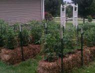 Sue Q's Garden