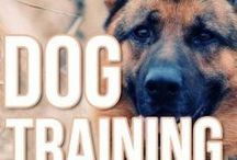 Training Tips / Fun and informative ways to help train your dog