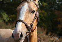 Kinský kůň (ČT)