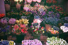 Flowers / Cactus are my favorite