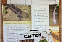 Nonfiction texts / Worksheets, lessons, and ideas to energize students' learning with nonfiction texts.