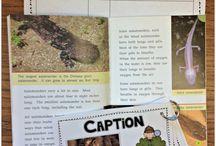 Classroom ideas / by Kim Holder