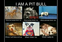 i love pit bulls  / they are the most amazing dogs in the world