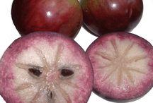 Star Apple/Caimito