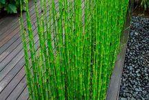 Plante de bassin
