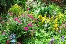 Garden & Flower