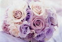 Svatba fialova
