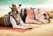 Um lugar fresco para seu melhor amigo / Com as altas temperaturas, os mascotes devem ser tratados com maiores cuidados. Saiba mais: www.stobag.com.br/post?id=38
