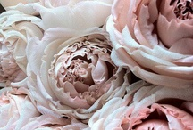 Bouquets & Flowers / by Dezerae Sabourin