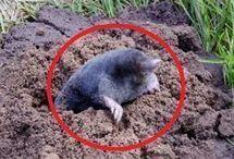 Odpudzovač krtkov a myší