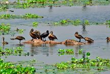 Bird Sanctuaries in Goa / Sanctuariesindia: Here you can get information about all Bird Sanctuaries, National Parks, Forests in Goa, India.
