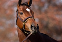 Marvelous Mares / by America's Best Racing