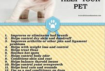Coconut Oil pet health