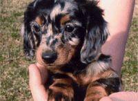 Puppy Love! / by Debbie Balusek