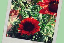 Primavera / fiori e piante