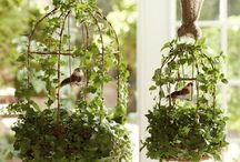 Decorating with birdcages / by Jennifer Stuckey Olsen