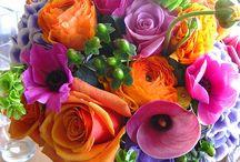 Rainbow flowers / Flowers